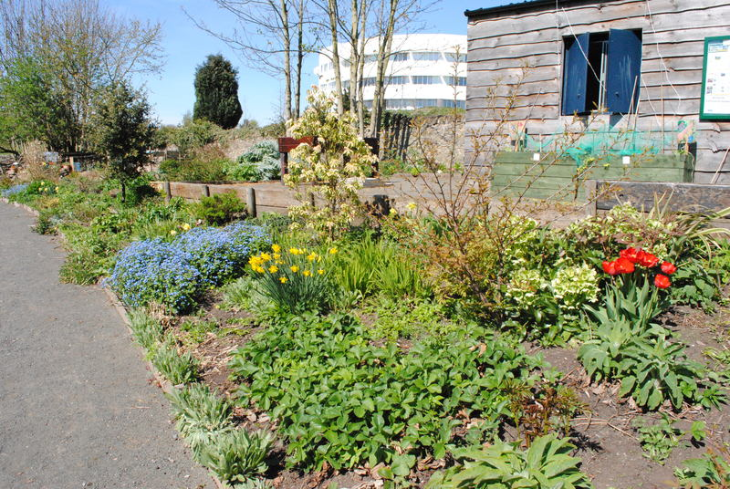 19-05-15 Donations wanted for Ninewells Community Garden