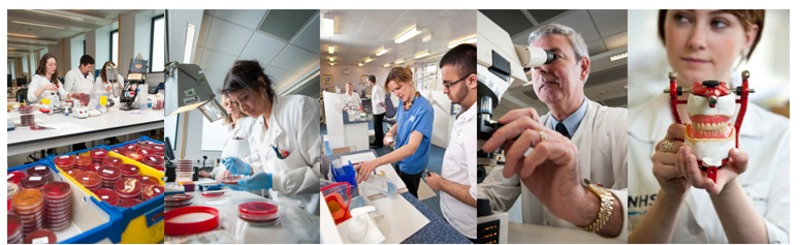 lab staff, scientists and technicians at work
